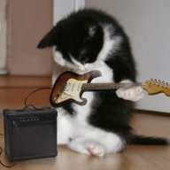 Catsarefluffy